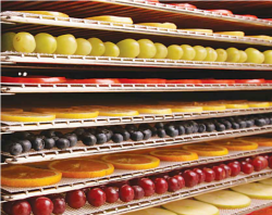 100% FDA Food Grade Stainless Steel Trays to Dehydrator all you fruits, vegetables and more!
